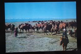 Mongolia.  Camel Boy Riding Horse - Old Postcard 1970s - Mongolie