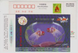 Golden Fish,China 1998 Famous Brand Jinyu Shirt Advertising Pre-stamped Card - Fishes