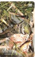 TARJETA DE BRASIL CON UN NIDO DE COLIBRI  (BIRD-PAJARO) - Pájaros