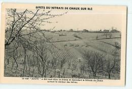 AZOTE - Effets Du Nitrate De Chaux Sur Le Blé - 2 Scans - Advertising