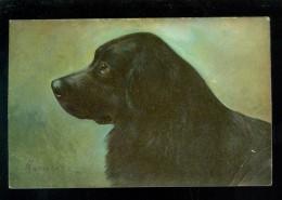 Chien  Hond  Dog - Chiens