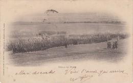 Défilé En Masse En 1902 - Manoeuvres