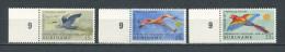 SURINAM  1971  N� 531/533  ** Neufs = MNH Superbes  Cote 2.75 � Faune oiseaux birds Fauna Animaux