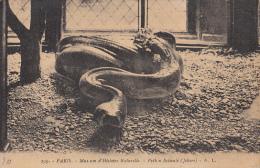 18934- SNAKE, PYTHON - Animales