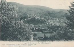 AK Heidelberg  In Der Blütezeit S/w Gelaufen 9.10.00 - Heidelberg