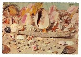 THE SUNNY CARIBBEAN - COQUILLAGES - Trésors De La Mer - Poissons Et Crustacés