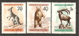 UNGHERIA - 1961 ANIMALI: Canguro, Orso, Stambecco 3v. Usati - Orsi