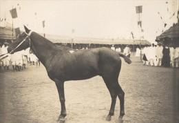 Elevage De Chevaux Madagascar Ancienne Photographie Diez 1924 - Africa
