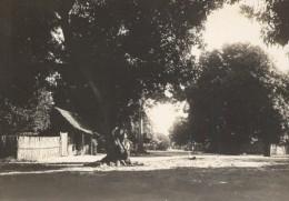 Nossi Be Effet De Contre-Jour Madagascar Ancienne Photographie Diez 1924 - Africa