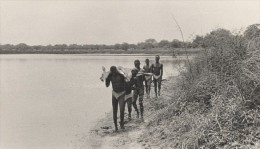 Attilio Gatti Expedition Africaine AEF Retour De La Chasse Ancienne Photo 1936 - Africa