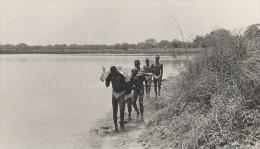 Attilio Gatti Expedition Africaine AEF Retour De La Chasse Ancienne Photo 1936