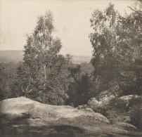 France Fontainebleau Vue Du Mont Chauvet Ancienne Photo Stereo SIP 1900 - Stereoscopic