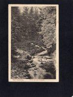 53844   Germania,  Bad Harzburg,  Partie Aus Dem Radautal,  VG  1920 - Bad Harzburg