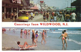 Greetings From Wildwood, New Jersey - Other