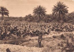 Afrique > GUINEE FORECARIAH  Plantation De Bananes (Bananiers)  (Editons : Hélio Lescuyer Et Fils )  *PRIX FIXE - Guinée