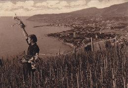 Italie - San Remo - Raccolta Di Garofani - Cueillettes Oeillets - Imperia