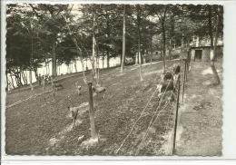 Loverval Parc à Gibier - Gerpinnes