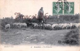 (33) Arcachon - Un Echassier - Berger Troupeau De Moutons Brebis - 2 SCANS - Arcachon