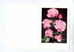 Carte Voeu Fdc 1979 Orchidee Vue Rose - FDC
