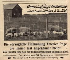 Original Werbung - 1911 - Conservenfabrik Lenzburg Und Jacot Des Combes In Biel / Bienne !!! - Advertising