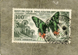 MADAGASCAR : Papillons : Chrysiridia madagascariensis - Insecte - L�pidopt�re - Faune -