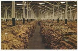 Interior Of A Loose-Leaf Tobacco Warehouse - Etats-Unis