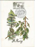 ANDORRE. Le Pin Sylvestre En Andorre,   Belle Carte-maximum, Année 1982 - Bäume