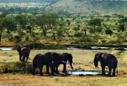 "ANIMAUX  SAUVAGES  L 2  ""  ELEPHANT   ""    CPM / CPSM  10X15 - Elephants"