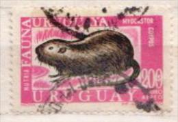 Uruguay Used Stamp - Knaagdieren