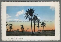 U3620 IRAQ BASRAHA PALM TREES VG (tur) - Iraq