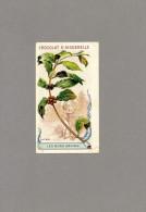 Chromo * Le Café  * Les Bons Grains - Cafeier Ethiopie  - Dos : Texte Explicatif- Chocolat Aiguebelle ( 2 Scan ) - Aiguebelle