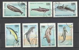 Cétacés Baleines Dauphins Whale Walfisch Ballena Delphin Delfin Delphin  ° 20 Cuba - Whales
