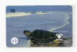 Sea Turtle – Tortoise – Tortuga Marina – Schildkroete – Tartaruga – Tortue – Turtle (27) - Turtles