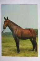 """(6/7/60) AK """"Pferd"""" - Pferde"""
