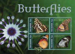 Gambia-2014-Butterflies - Unclassified