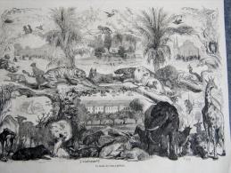 Gravure Le Jardins Des Plantes De Paris - Animaux éléphant , Girafe Singe ... Trés Belle - Unclassified
