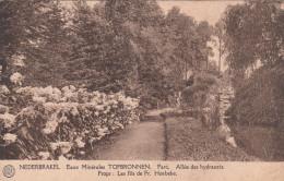 Nederbrakel, Eaux Minérales Top Bronnen, Parc Allée Des Hydrauzia (pk18704) - Brakel