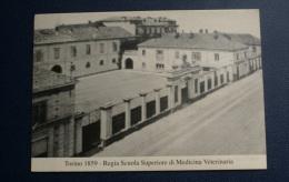 ITALIA 2004 - CARTOLINA DI TORINO CON ANNULLI SPECIALI STORIA MEDICINA VETERINARIA - Expositions