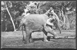 Ceylon Elephant At Work, Plate & Co Postcard - Sri Lanka (Ceylon)