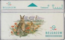 BELGIUM - Rabbit, CN : 424F, used