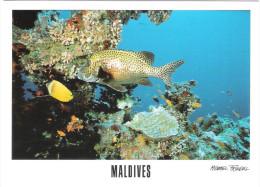 Maldiven - Maldives - Coral Reef Snorkeling - Underwater Sea Life - Fish -  Nice Stamp - Maldiven