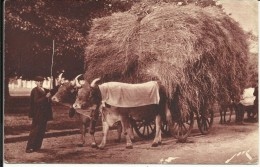 Un Attelage Paysan , Terroir Pyrénéen ; Apyrenees Team ; Carro Campesino En Los Pireneos ; CPA ANIMEE - France