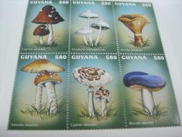 Guyana-Mushrooms - Mushrooms