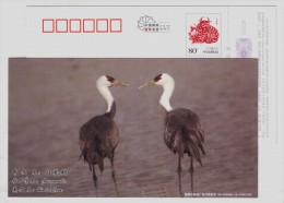 Hooded Crane Bird,China 2009 Xiangtan Post New Year Greeting Advertising Pre-stamped Card - Cranes And Other Gruiformes