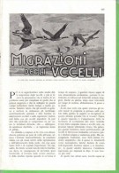MIGRAZIONI DEGLI UCCELLI  1934 ARTICOLO RITAGLIATO DA GIORNALE - Immagine Tagliata
