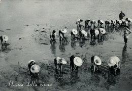 BURONZO (VERCELLI) MUSICA DELLA RISAIA 1956 - Vercelli