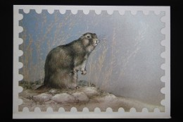 Old USSR Postcard. Menzbier's Marmot 1987 - Animals