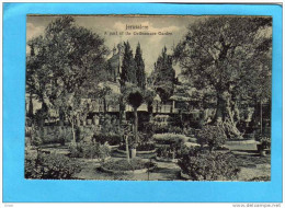 JERUSALEM- - Jardin De Getsémane Beau Plan- A Part Of Garden Années 1900 - Palestine