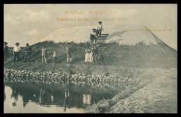 SETUBAL - Cobertura Do Sal - Marinhas Do Sado ( Ed. Col. Castro E Oliveira Nº 24) Carte Postale - Setúbal