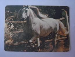 1 CALENDAR CALENDARIO CALENDRIER KALENDER SMALL - ANIMAL CAVALO HORSE CABALLO